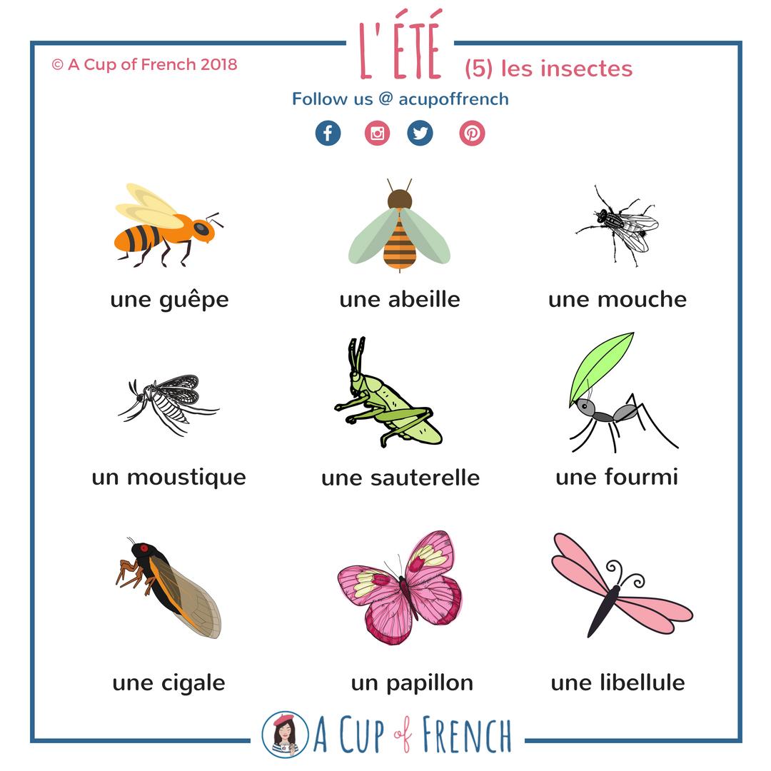 Summer Insects | Apprendre Le Français Parler, Apprendre Le concernant Les Noms Des Insectes