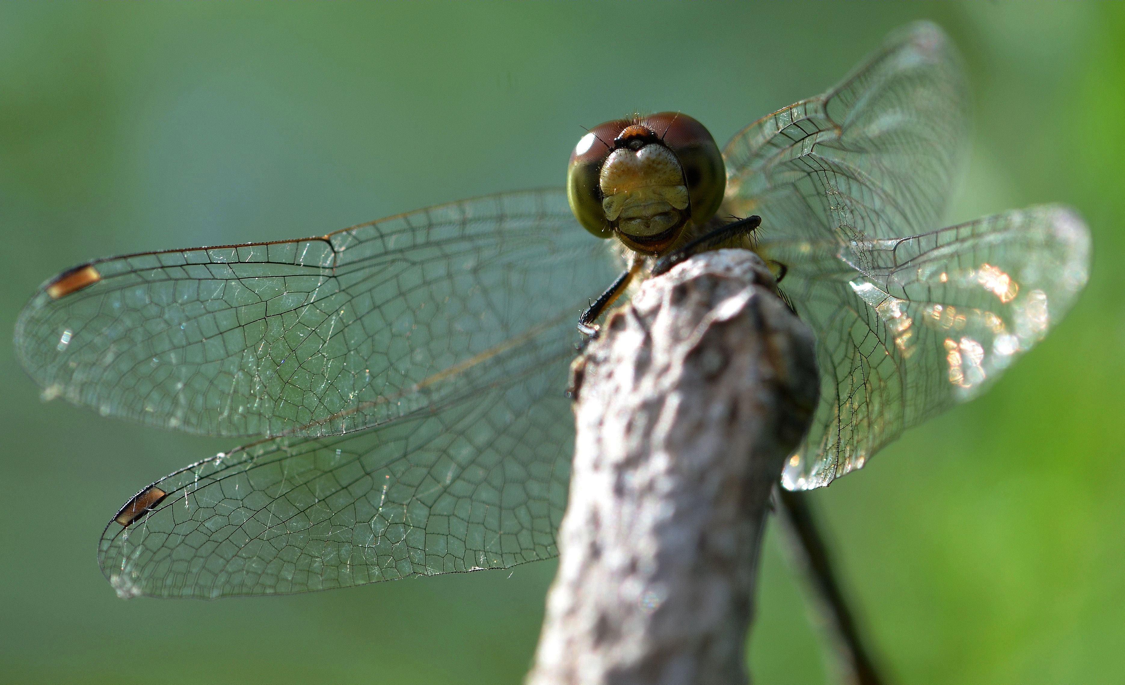 Tableau Des Ordres D'insectes | Espace Pour La Vie encequiconcerne Les Noms Des Insectes