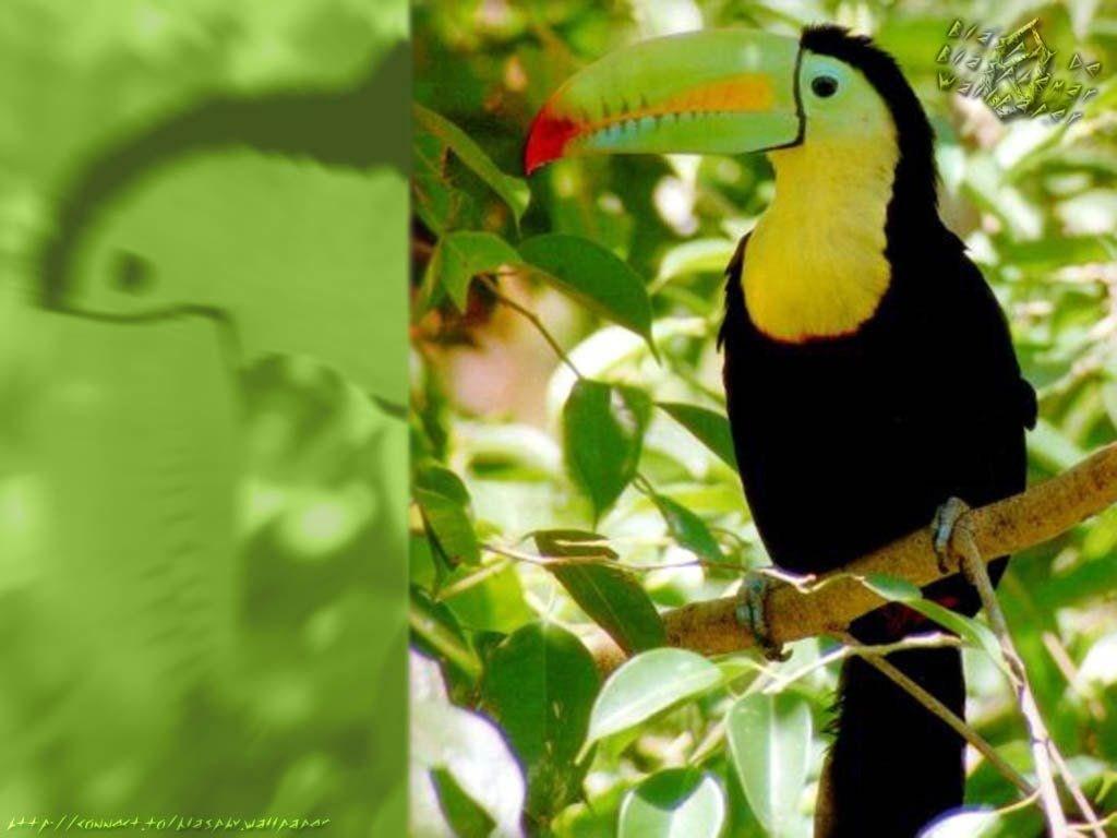 Télécharger Fonds D'écran Oiseau Gratuitement destiné Images D Oiseaux Gratuites