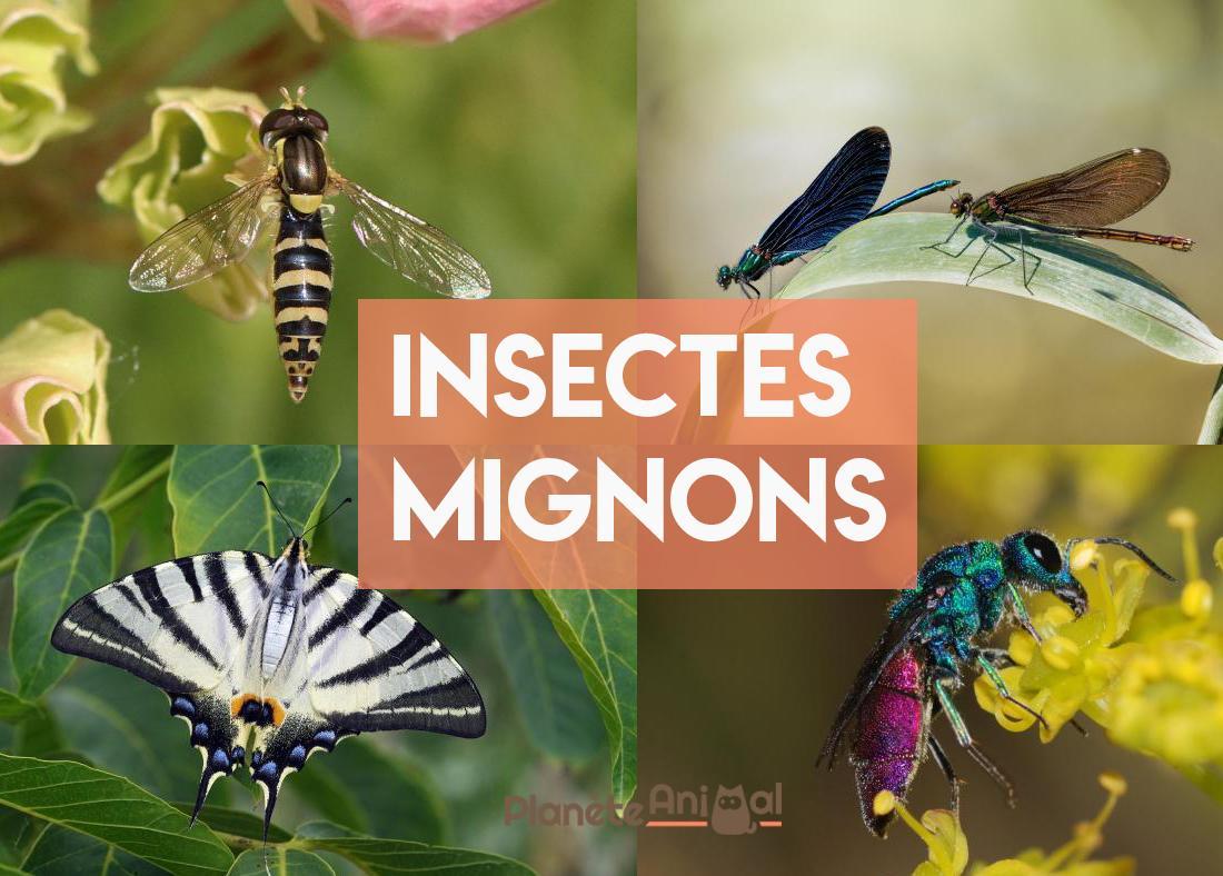 Top 12 Des Insectes Les Plus Mignons Du Monde dedans Les Noms Des Insectes