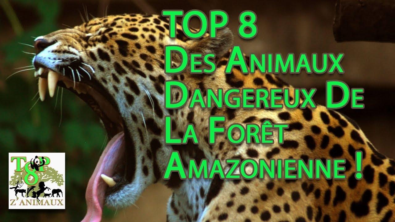 Top 8 Des Animaux Dangereux De La Forêt Amazonienne! concernant Image D Animaux De La Foret
