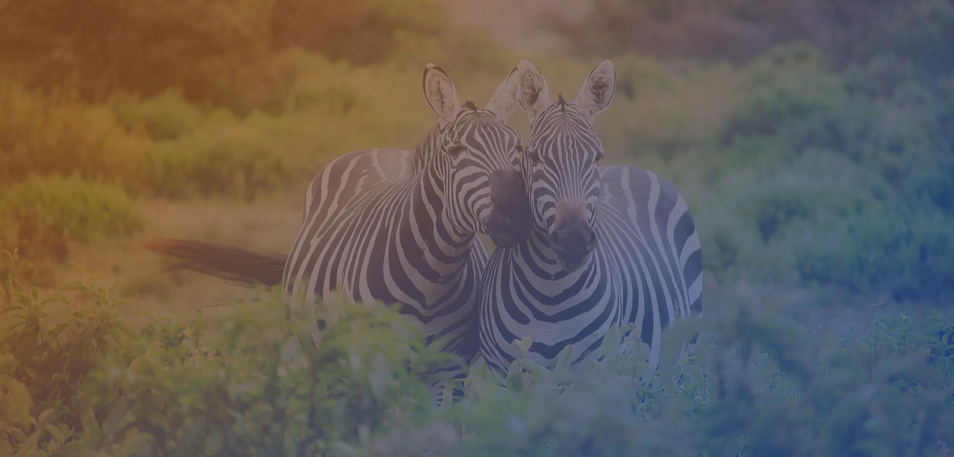 Top Destinations Vacances Afrique 2019, Voyager Au Coeur De à Animaux Sauvages De L Afrique