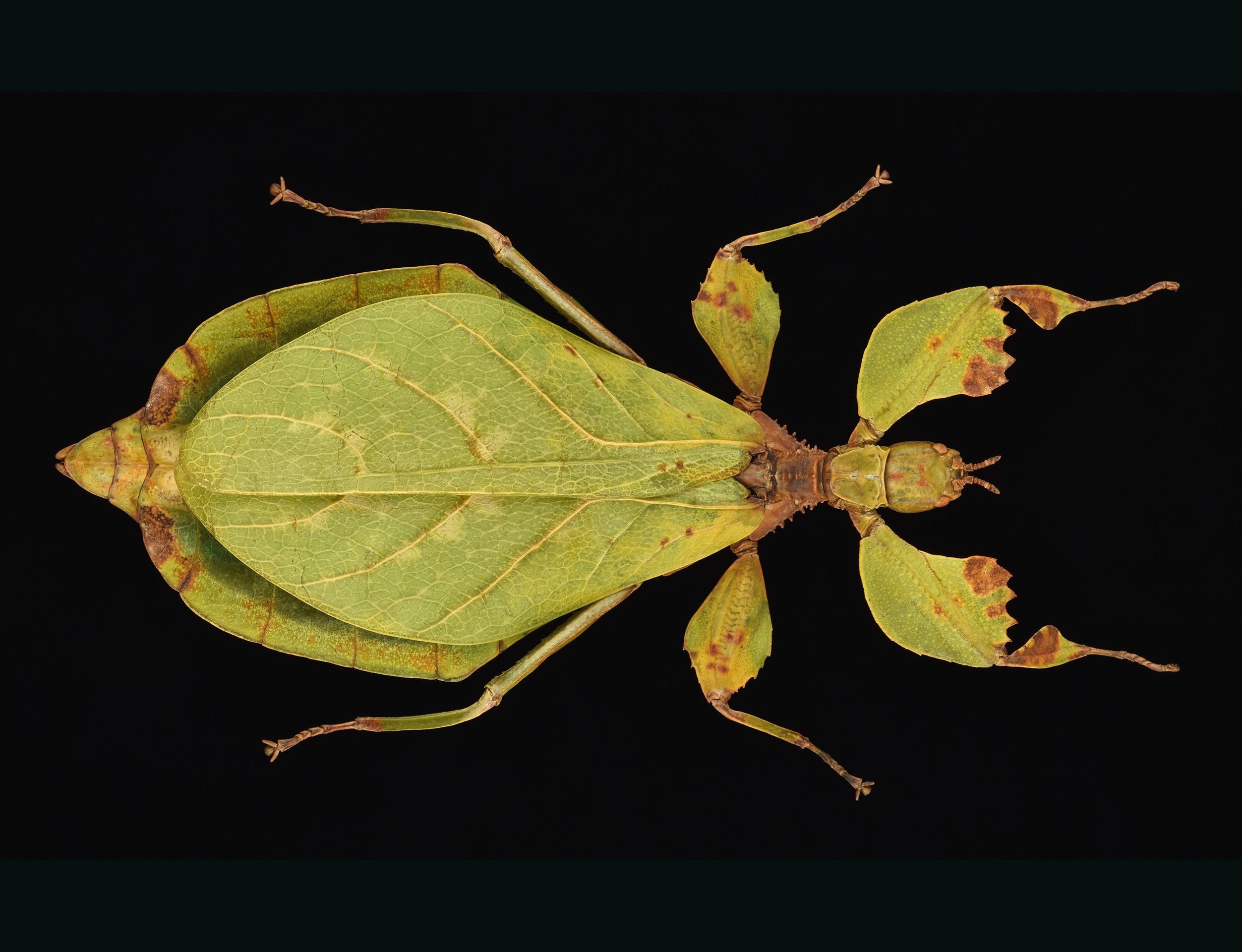 Un Insecte Nommé En L'honneur D'un Employé De L'insectarium pour Les Noms Des Insectes