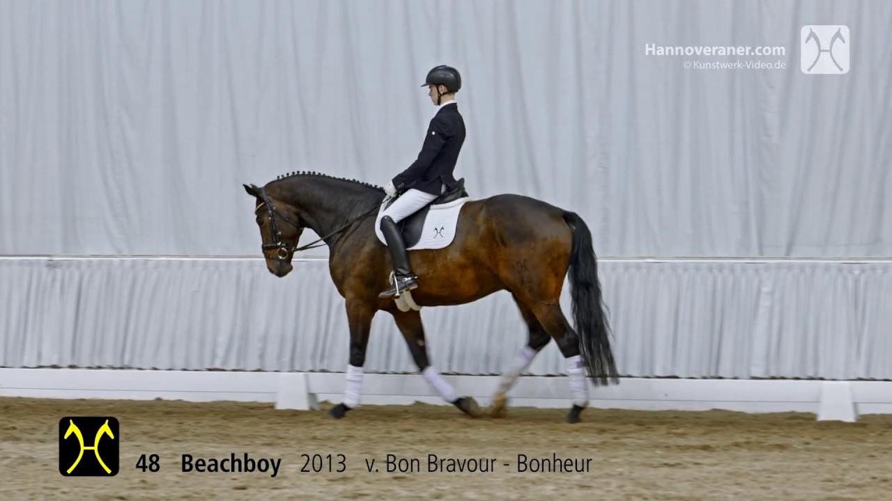 Verdener Auktion Am 13./14. Juli-Nr. 48 Beachboy V. Bon Bravour-Bonheur tout Bon The Bonheur