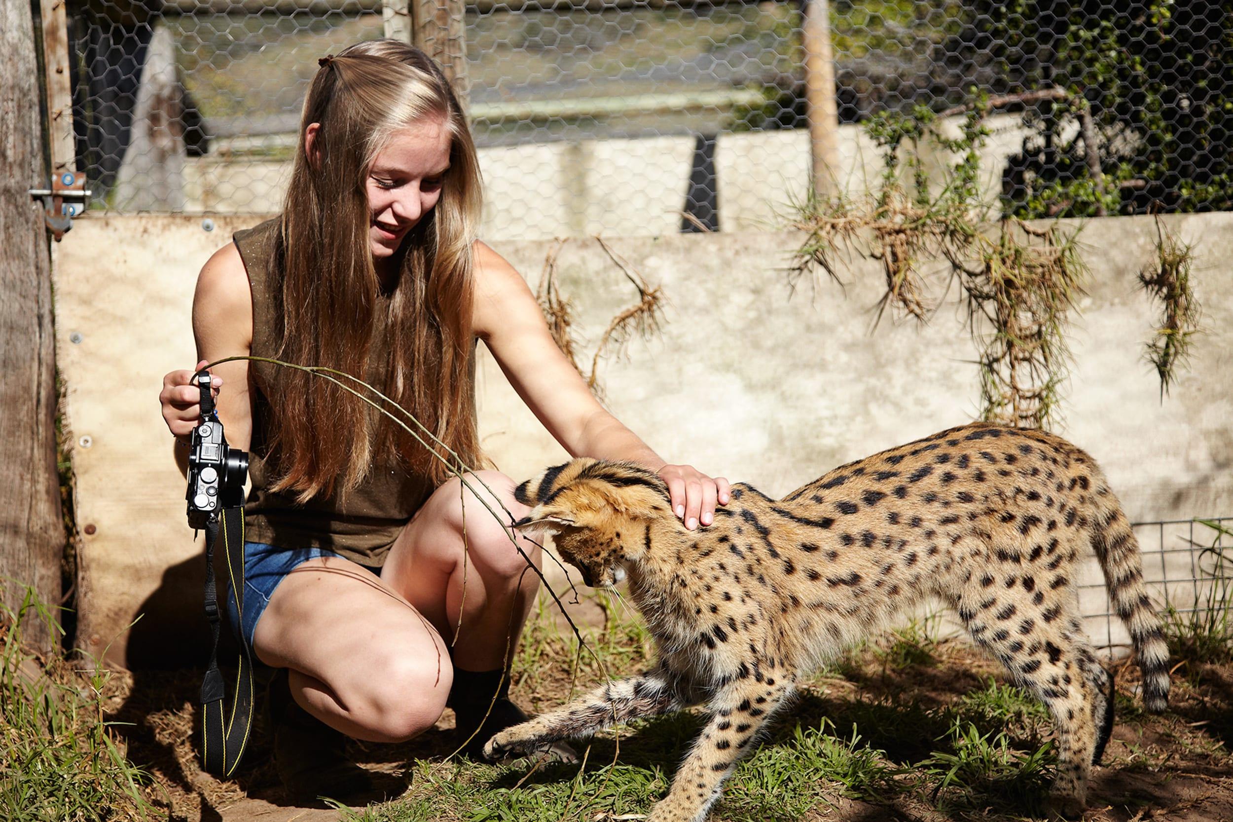 Volontariat Animalier Dans Un Centre De Réhabilitation En tout Animaux Sauvages De L Afrique