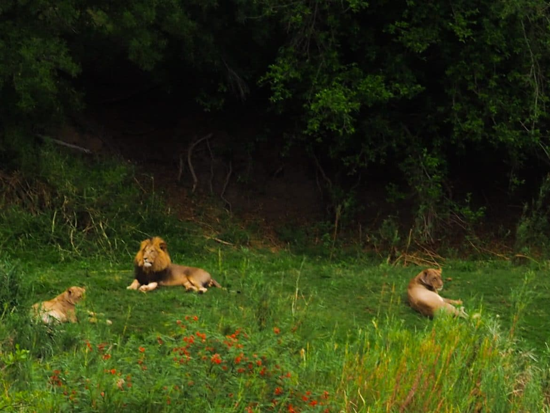 Volontariat Avec Des Animaux Sauvages En Afrique : Avis tout Animaux Sauvages De L Afrique