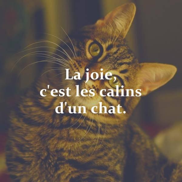 200+ Citations Sur Les Chats Qui Vous Feront Rire, Sourire pour Paroles 3 Petits Chats