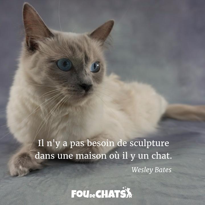 Bonne Journée Les Amis ! . Https://Foudechats.fr/ Le dedans Paroles 3 Petits Chats
