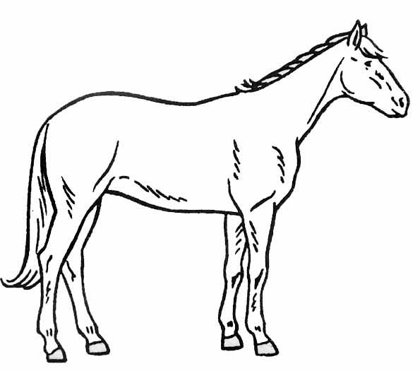 Cheval #104 (Animaux) – Coloriages À Imprimer intérieur Dessin De Cheval À Imprimer