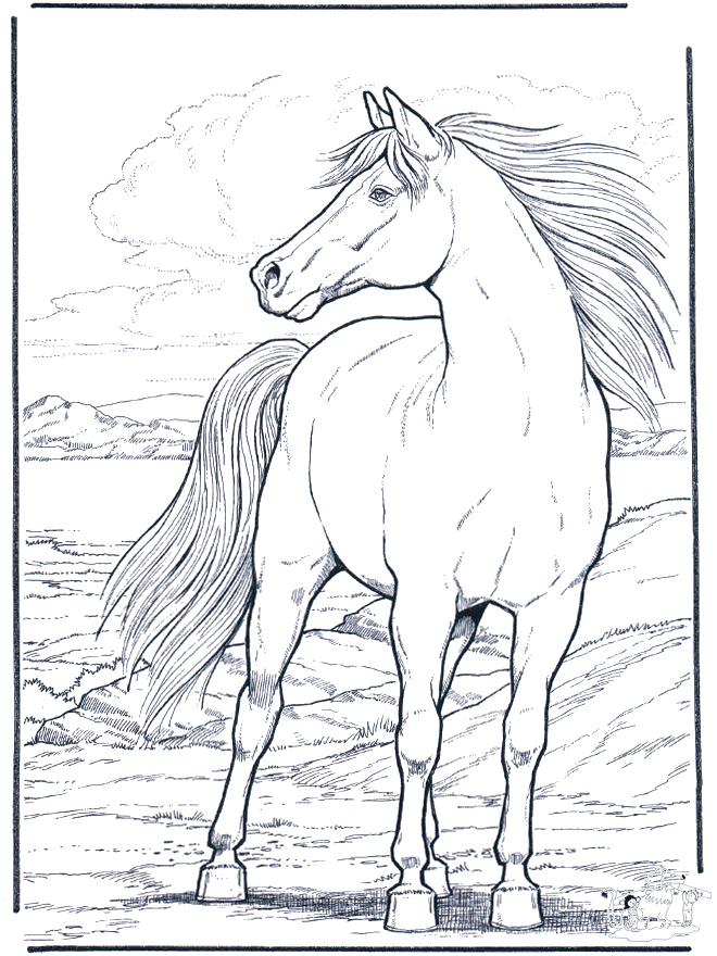 Cheval Dans Le Vent – Coloriages De Chevaux Et Poneys avec Dessin De Cheval À Imprimer