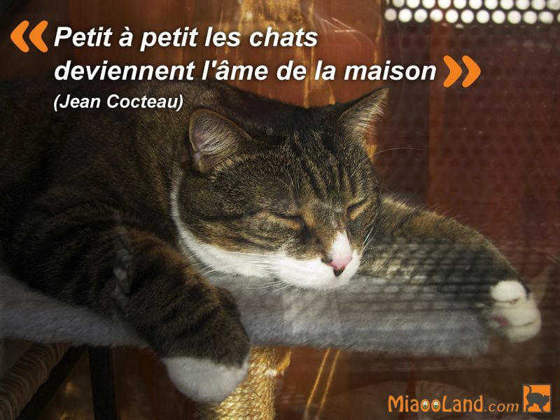 Citation Chat Petit À Petit Les Chats Deviennent L'Âme De encequiconcerne Paroles 3 Petits Chats