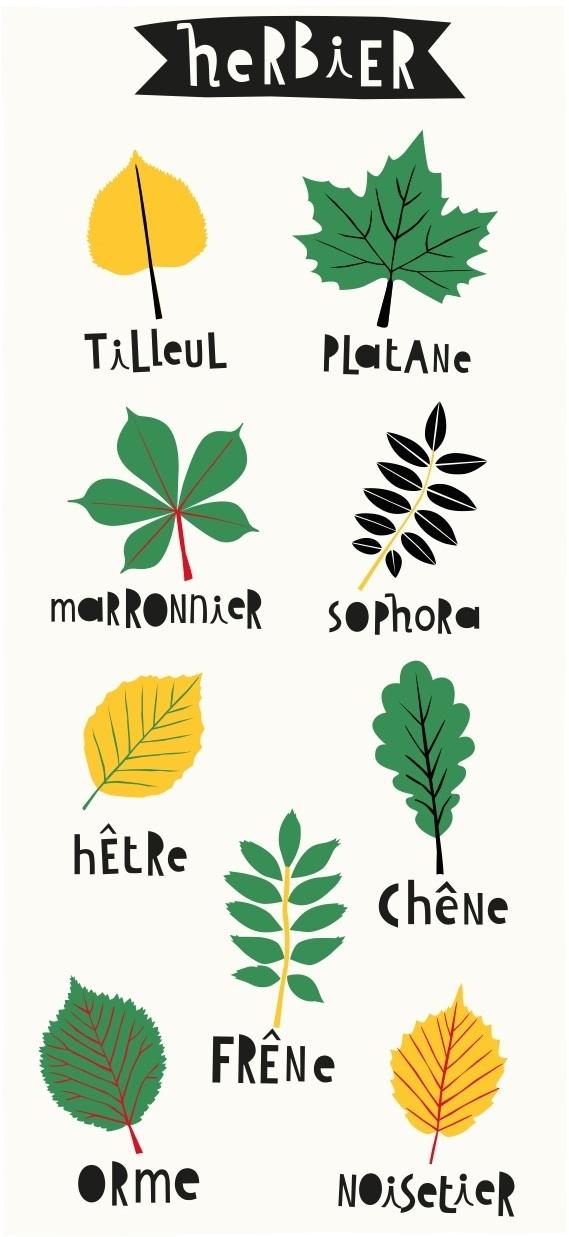 Dendrologie À Usage Familial | Herbier, Dessin Nature pour Feuille D Érable Dessin