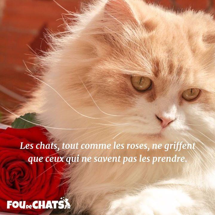 Épinglé Par Nathalie Giroux Sur Pensées,Citations Et tout Paroles 3 Petits Chats