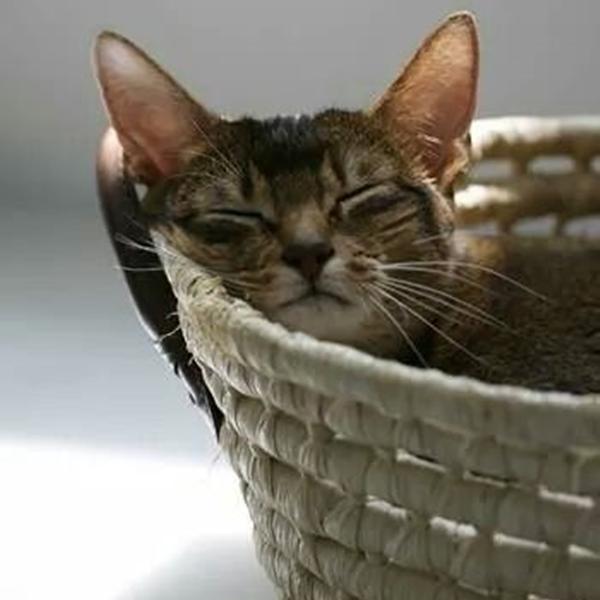 Épinglé Par Sylvie Sur Les Chats (Avec Images) | Chat pour Paroles 3 Petits Chats