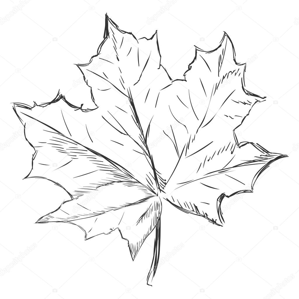 Feuille D'Érable Unique Sketch — Image Vectorielle tout Feuille D Érable Dessin