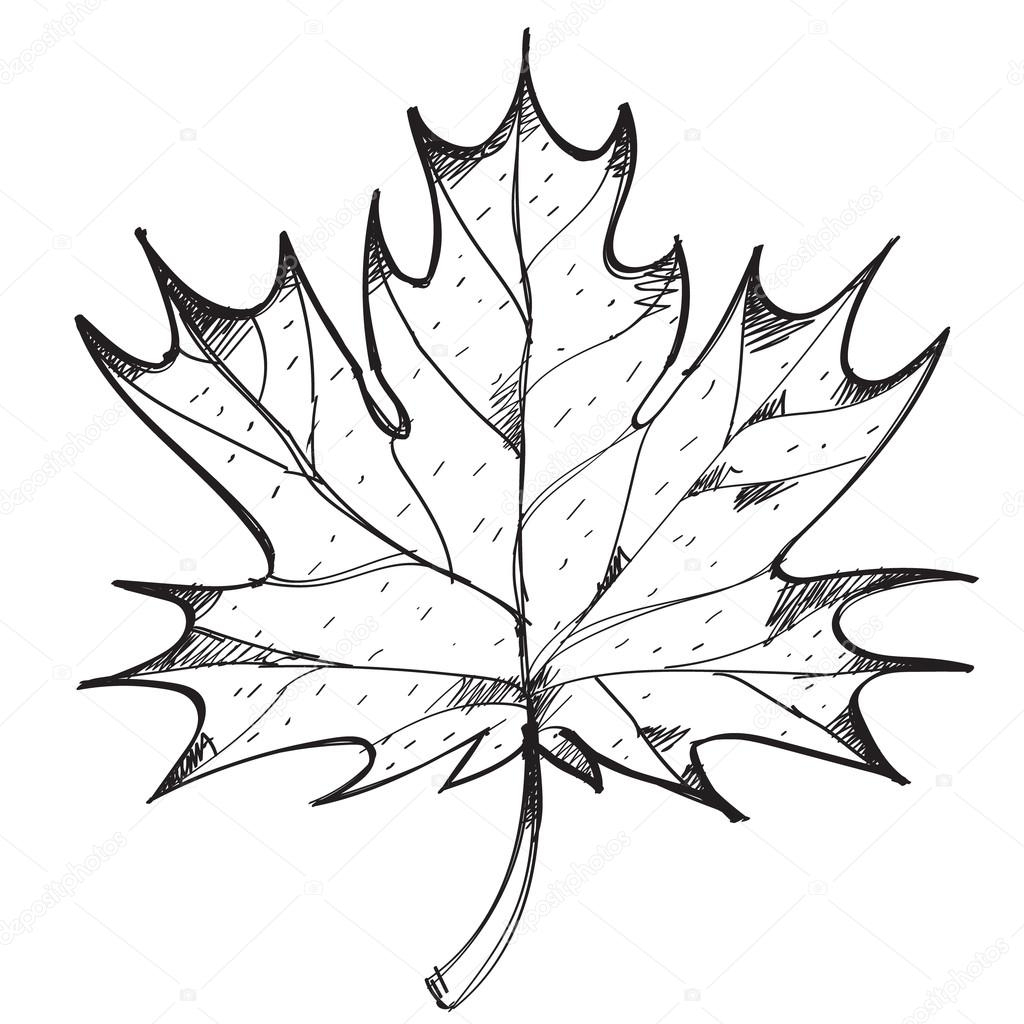Maple Leaf Outline Drawing. — Stock Vector © Filkusto encequiconcerne Feuille D Érable Dessin