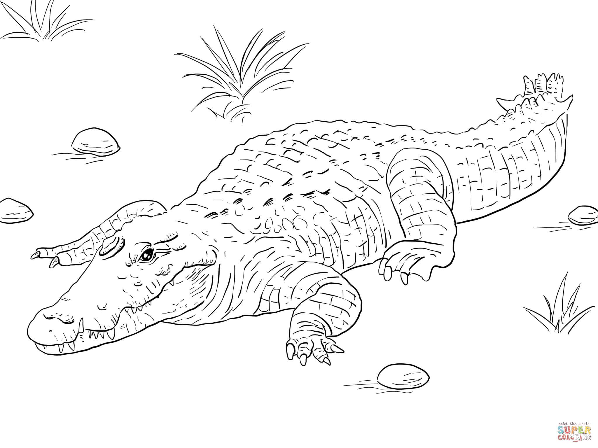 106 Dessins De Coloriage Crocodile À Imprimer Sur dedans Crocodile À Colorier