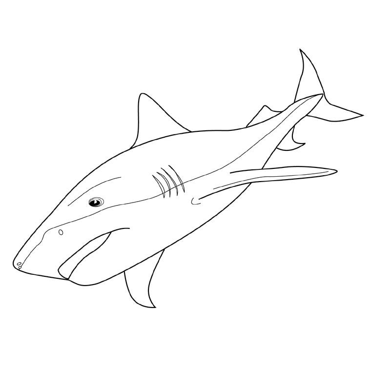 122 Dessins De Coloriage Requin À Imprimer pour Coloriage Requin