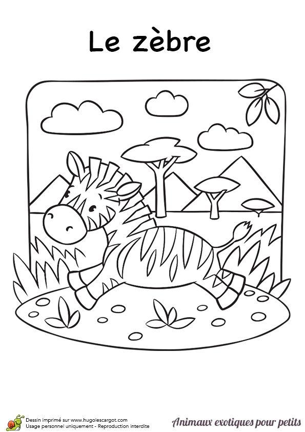 18 Best Zebre Images On Pinterest | Wild Animals concernant Coloriage Animaux De La Savane