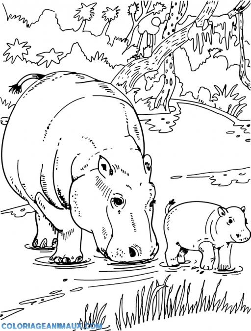 95 Dessins De Coloriage Animaux De La Savane À Imprimer concernant Coloriage Animaux De La Savane