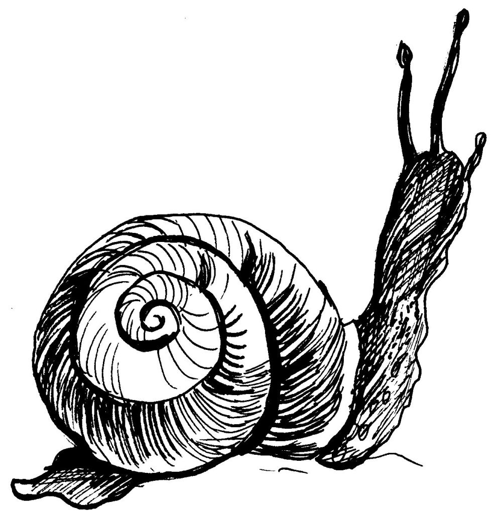 97 Dessins De Coloriage Escargot De Mer À Imprimer dedans Photo Escargot A Imprimer