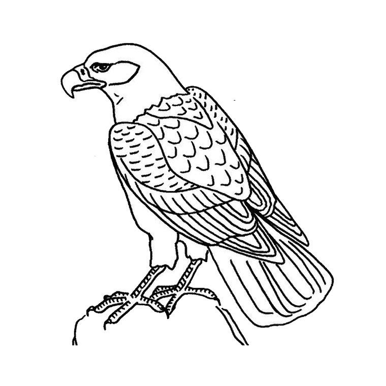 Aigle Royal Dessin - Ohbq concernant Coloriage Aigle A Imprimer Gratuit