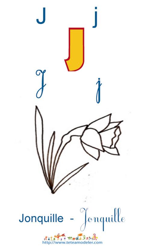 Apprendre Le J Et Colorier La Jonquille serapportantà Jonquille Dessin