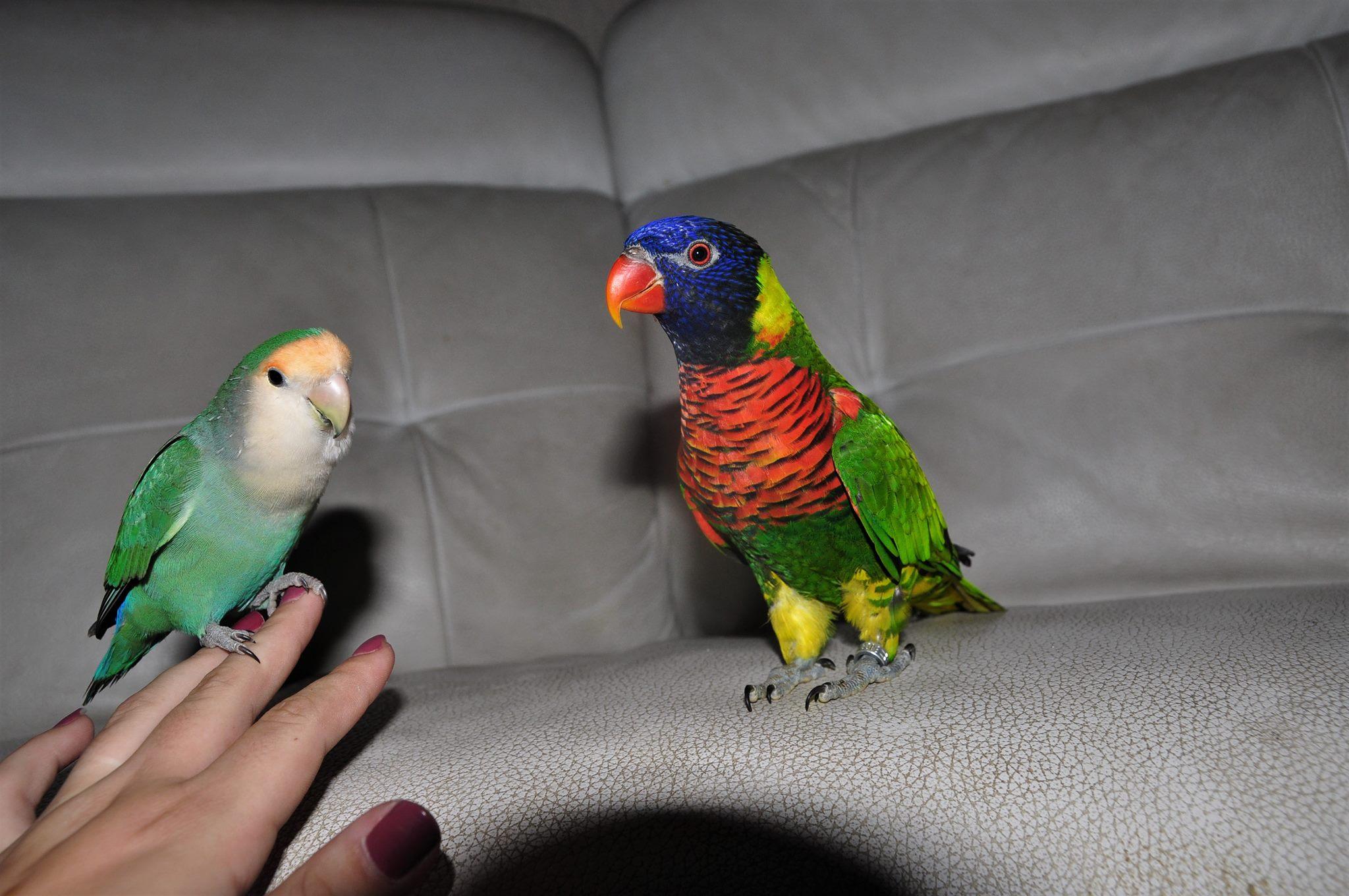 Apprivoiser Son Oiseau, De Son Arrivée À Sa Venue Sur avec Oiseau Blessé Que Faire
