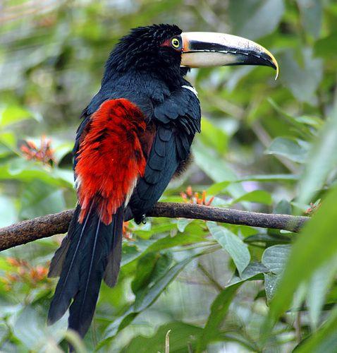 Beautiful Birds Fond D'écran In The Beauté De La Nature à Fond D'?Cran Oiseaux Exotiques