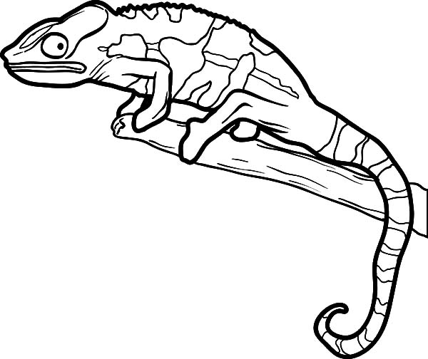 Beautiful Color Lizard Coloring Pages - Download & Print serapportantà Coloriage Lézard