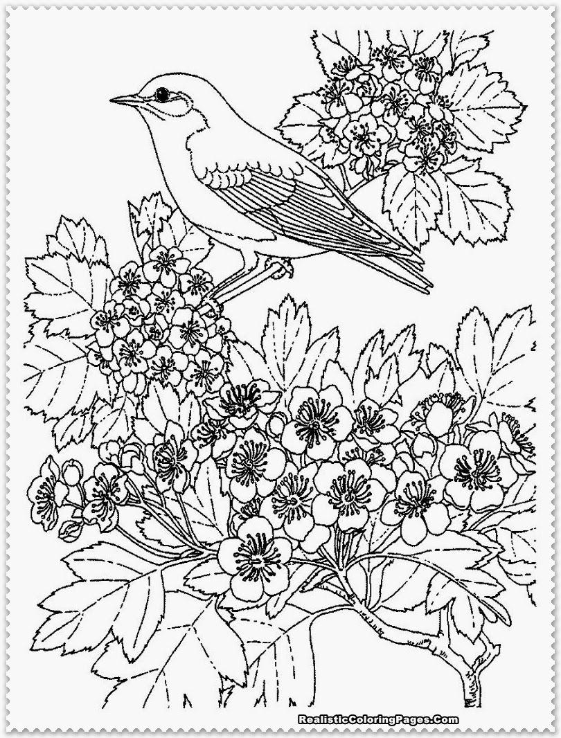 Bird Coloring Pages Realistic | Bird Coloring Pages, Adult destiné Coloriage Adultes À Imprimer