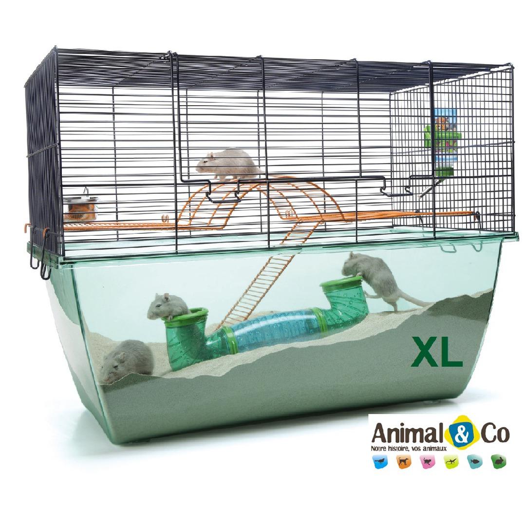 Cage Habitat Pour Petits Rongeurs - Animal & Co tout Photo Cage ? ?Cureuil