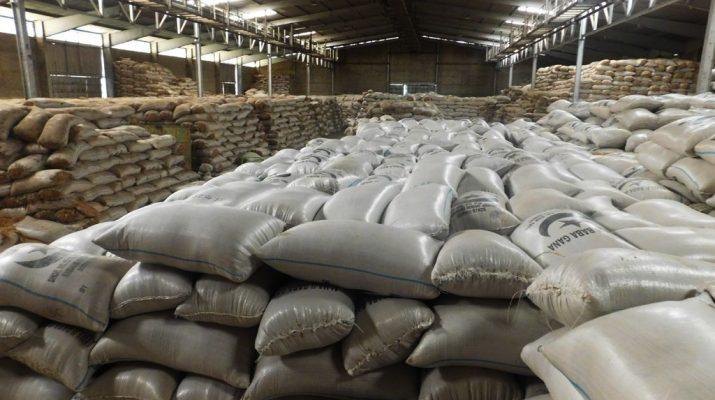 Cameroun : 450 Tonnes De Riz Paddy Exportées De Manière serapportantà Voix Du Paysan