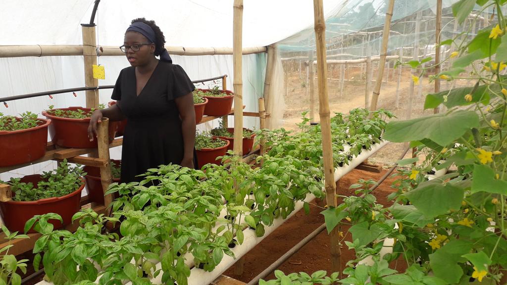 Cameroun : Bienvenue Dans L'hydroponie À Yaoundé - La Voix destiné La Voix Du Paysan Cameroun
