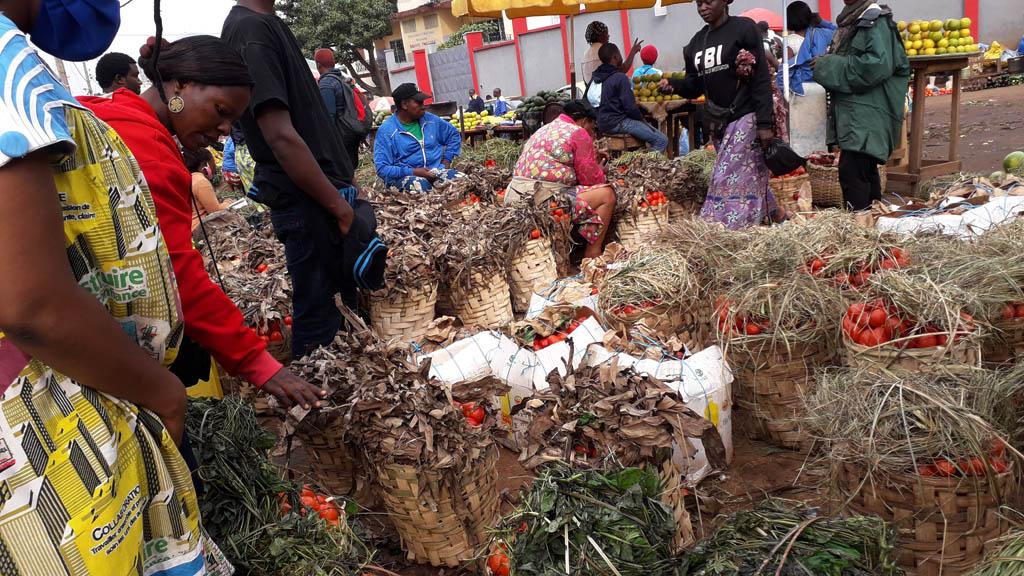 Cameroun : L'avalanche De Tomates Masque La Pénurie avec La Voix Du Paysan Cameroun