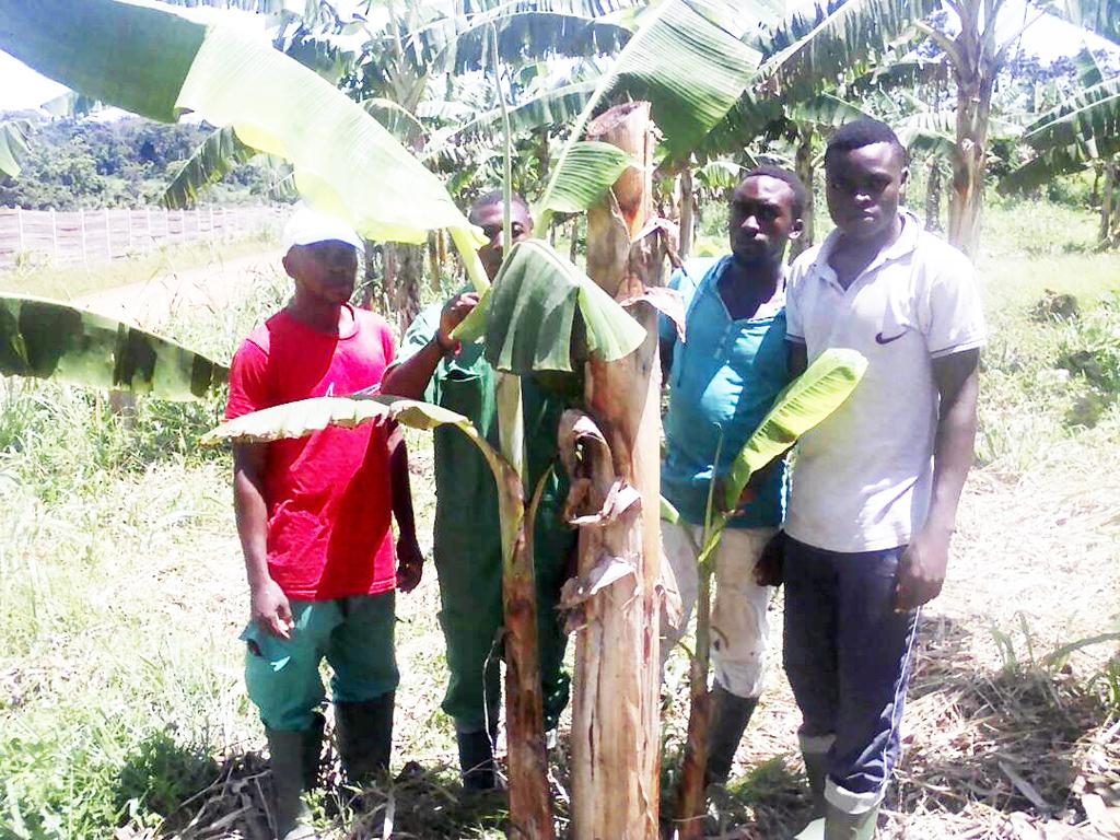Cameroun : Les Nouveaux Paysans - Ils Sont Jeunes Diplômés intérieur La Voix Du Paysan Cameroun