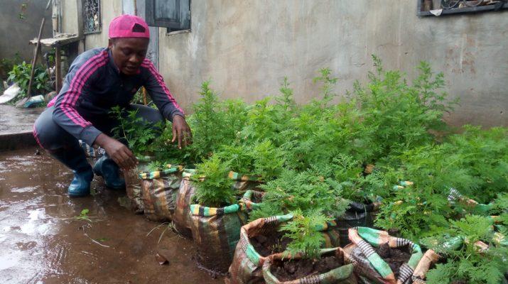 Cameroun : Nathalie Ladem, Symbole D'Un Amour Ardent Pour destiné La Voix Du Paysan Cameroun