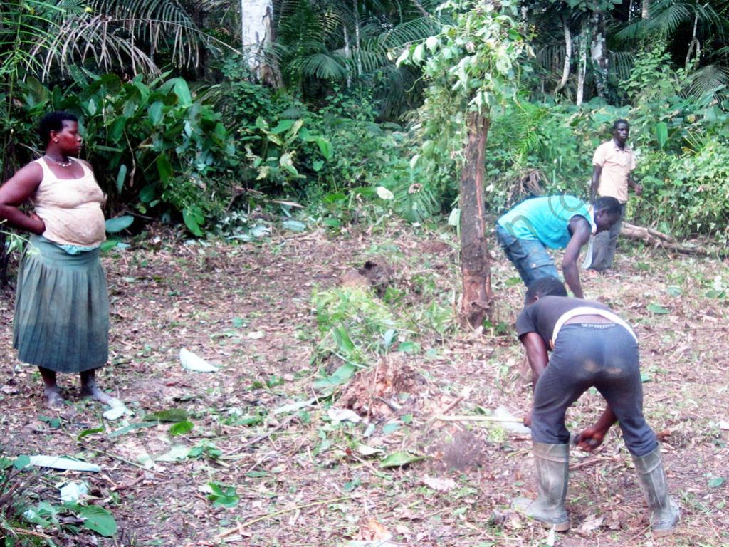 Cameroun : Quels Projets Agricoles Lancer Sur Un Hectare concernant La Voix Du Paysan Cameroun