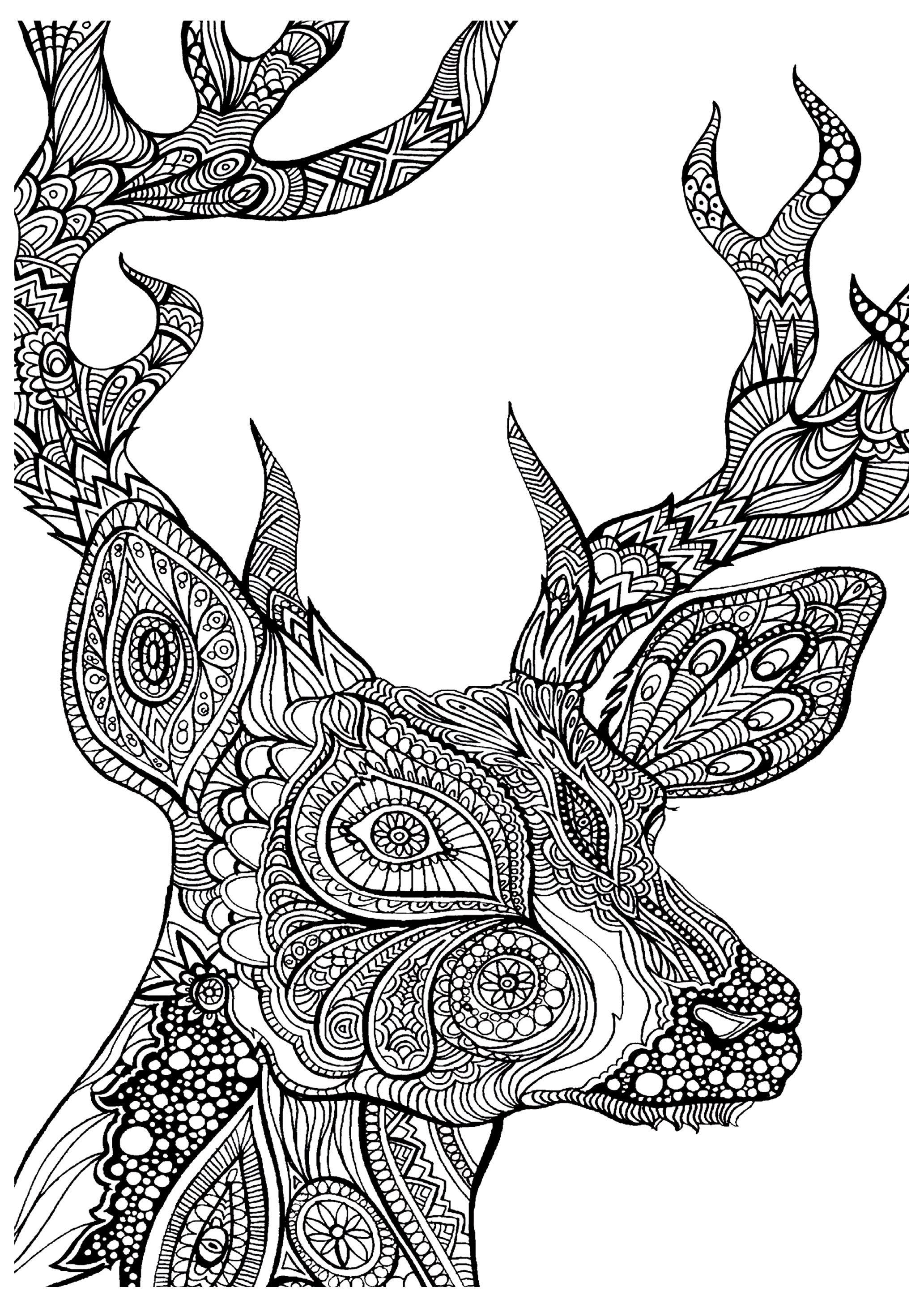 Cerf Zoom - Coloriages Cerfs - Just Color | Coloriage serapportantà Coloriage Kangourou A Imprimer Gratuit