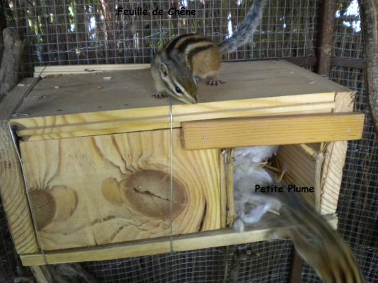 Choisir Son Écureuil à Photo Cage ? ?Cureuil