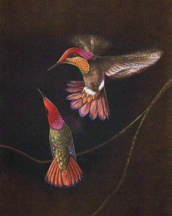Colibris And Birds Of Paradise This Print Is The Original à Coloriage Oiseaux Tropicaux