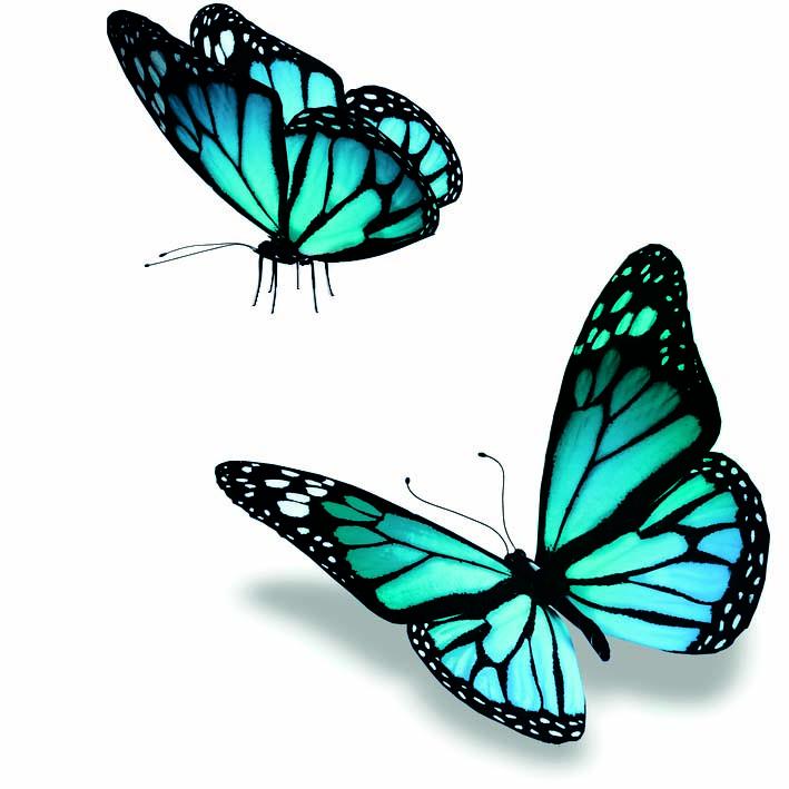 Collection Miss Bien-Etre tout Dessin De Papillon En Couleur