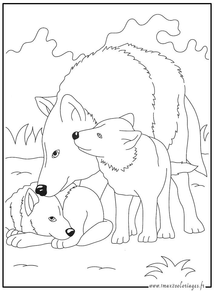 Coloriage à Dessiner Un Loup encequiconcerne Coloriage Loup