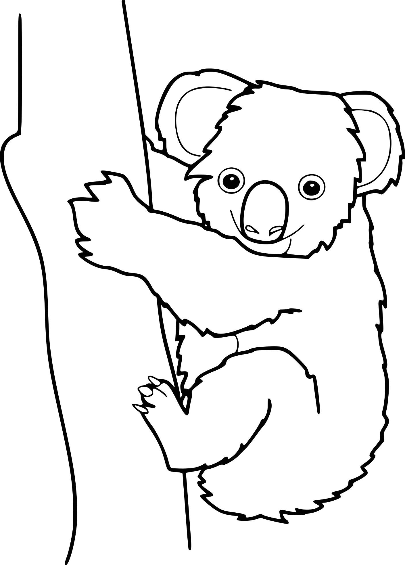 Coloriage A Imprimer Koala Coloriage Koala À Imprimer avec Coloriage Koala A Imprimer