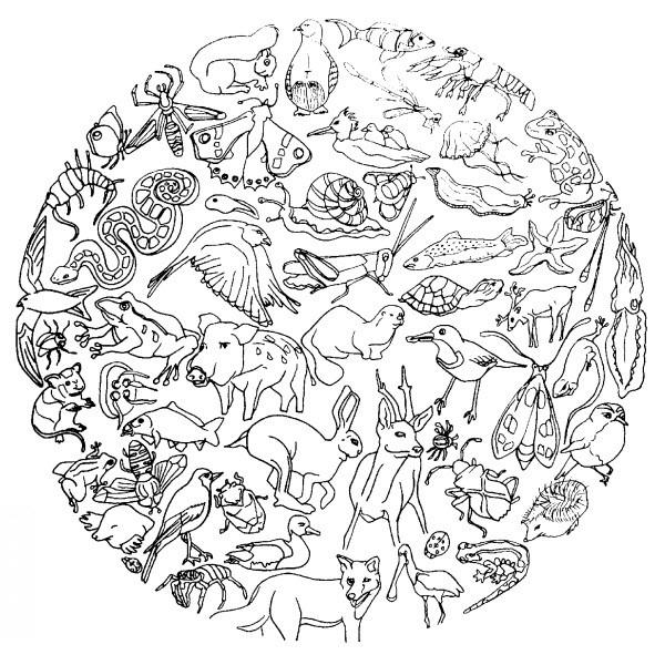 Coloriage Animaux Mandala Dessin Gratuit À Imprimer tout Coloriage Zebre A Imprimer Gratuit