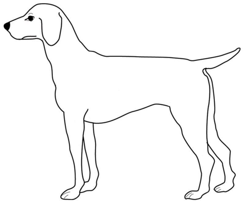 Coloriage Annimaux Domestique tout Coloriage Labrador A Imprimer