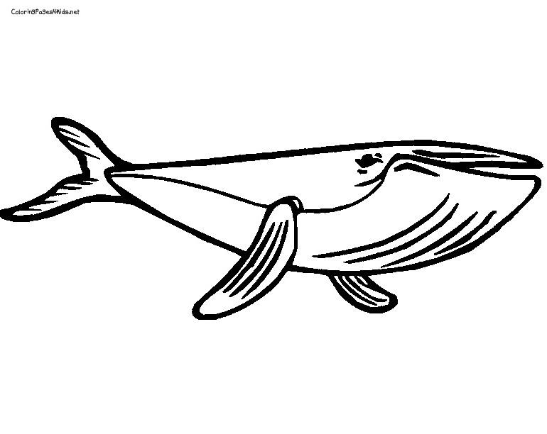 Coloriage Baleine À Imprimer Pour Les Enfants - Cp02701 destiné Coloriage Baleine A Imprimer Gratuit