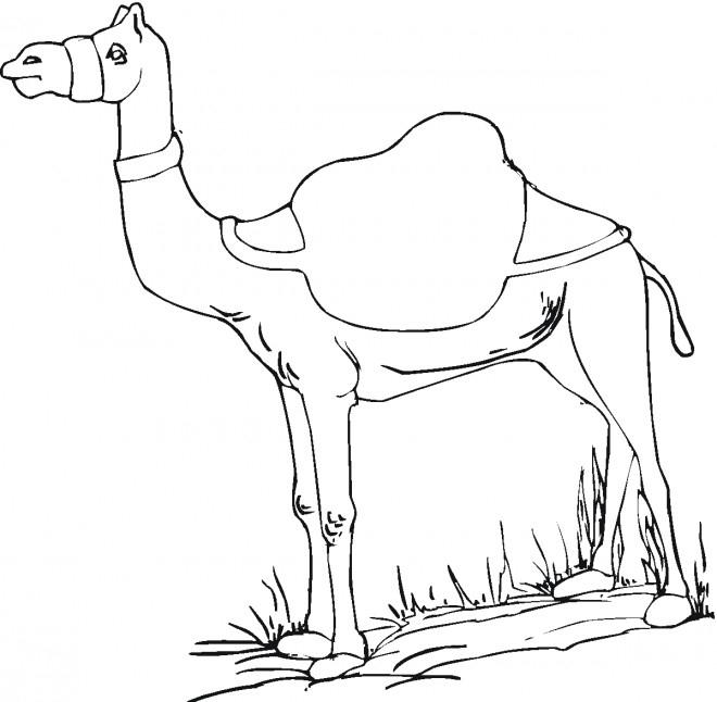 Coloriage Chameau Animal Dessin Gratuit À Imprimer intérieur Coloriage Chameau