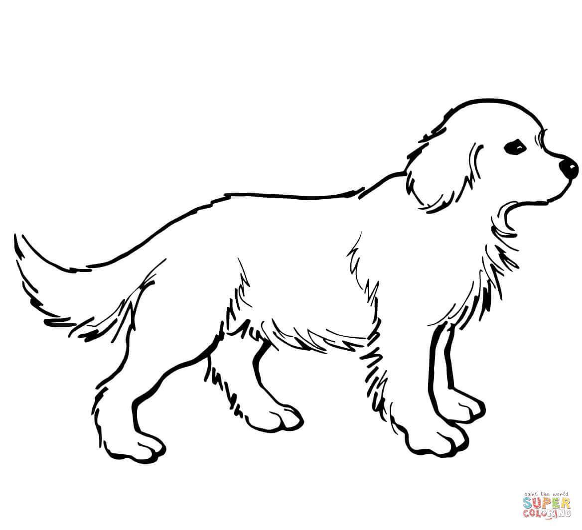 Coloriage - Chiot Golden Retriever | Coloriages À Imprimer à Coloriage Labrador A Imprimer