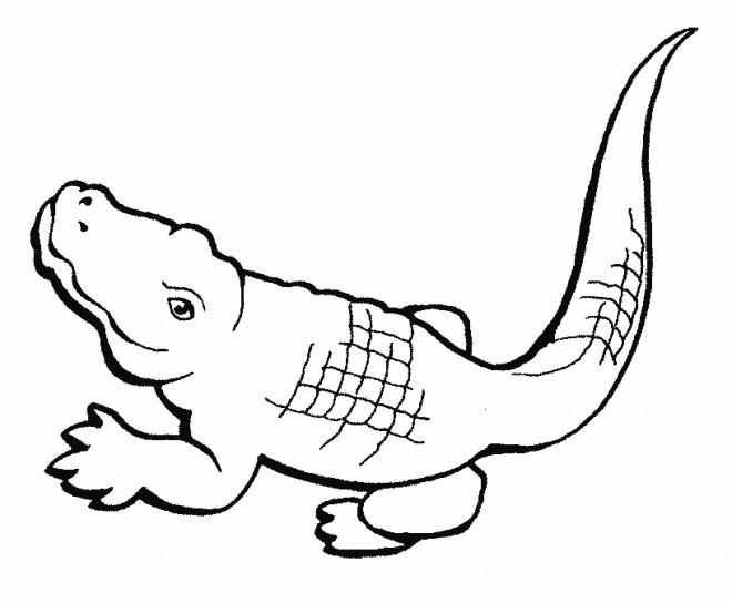 Coloriage Crocodile Facile dedans Coloriage Crocodile A Imprimer Gratuit
